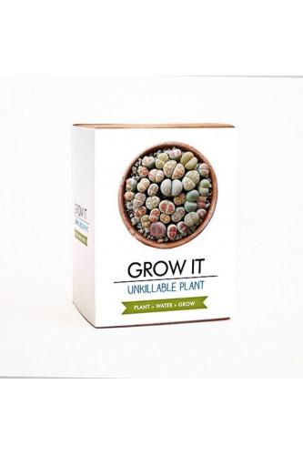 Zestaw nasion do uprawy, Zestaw nasion do uprawy: Zestaw nasion do uprawy - Nieśmiertelna